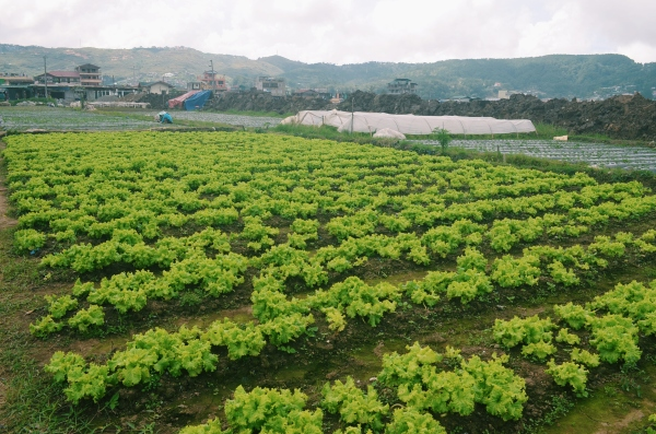La Trinidad Farm