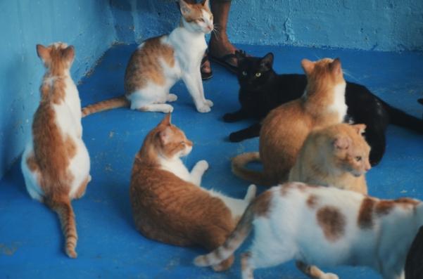 Happy Fat Cats!