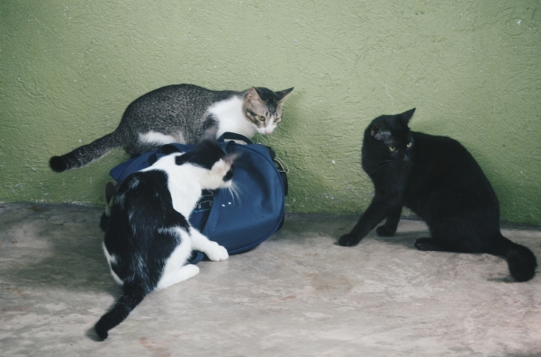 This was the first time I entered the cattery. They were so excited and these three furballs started to play with my bags.