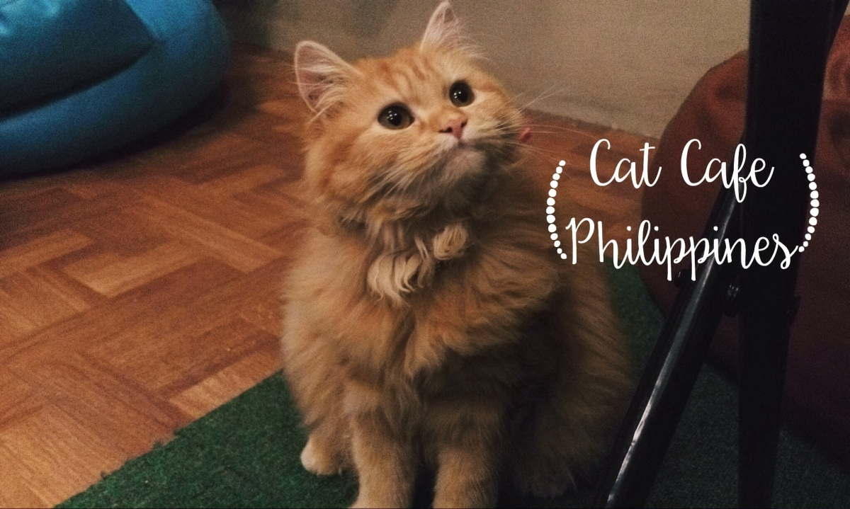 The First Cat Cafe in PH: Cat Cafe Philippines