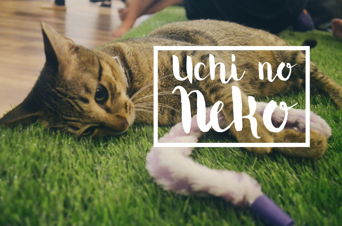 Uchi no Neko: The Cat House - A Japanese Cat Cafe Experience